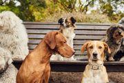 Gassi Service und Hundebetreuung