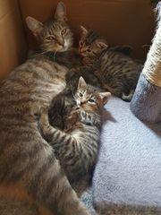 3 Katzenbaby