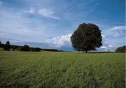 Suche Grundstück in Cadolzburg Langenzenn