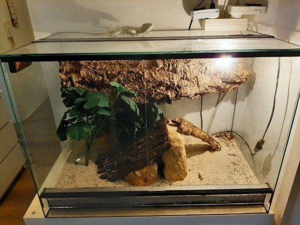Terrarium Glas Korkröhre viel Deko