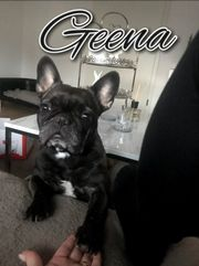 Geena -- Vermittlungshilfe --