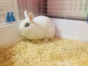 Ich verkaufe Kaninchen 10 Monate