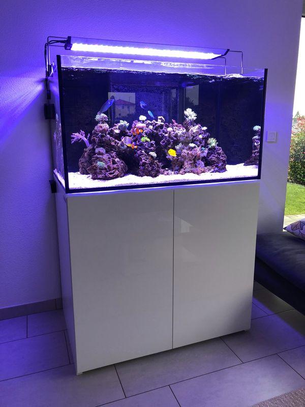 Meerwasseraquarium Aqua Medic Armatus 375