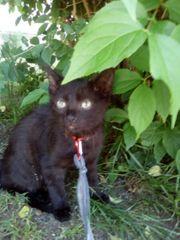 Kitten Jungkatzen Katzenbabies