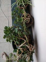 Verschenke Div Pflanzen Abholung