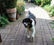 Felia - auf PS in Hamminkeln -