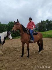 Reitbeteiligung zu vergeben oder Pferd