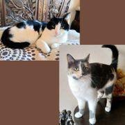 Katzenfreundinnen Thalia und Stella möchten