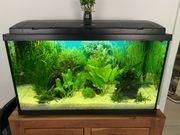 Aquarium 112 Liter Eheim mit