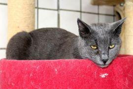 Kater Mr Miez sucht Zuhause: Kleinanzeigen aus Helpsen - Rubrik Katzen