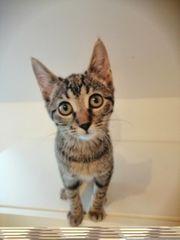 Kitten suchen noch ihre Familie
