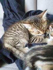 süßes kätzchen sucht neues zuhause