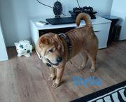Die traumhafte Stella sucht ihre