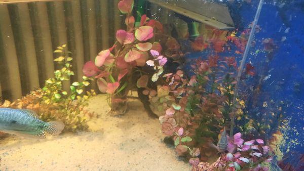 Fisch besatz mit 2 pumpen