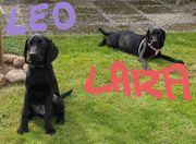 Lara und Leo schwarze Labrador