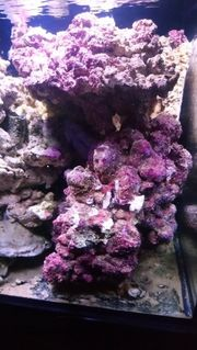 Meerwasser Reefgestein real reef Rock