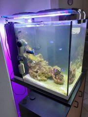 meerwasseraquarium mit technik