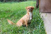 FINE - ein liebes kleines Hundemädchen
