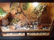 Leopardgecko zu verkaufen