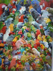 Nehme Papageien auf Papageien Auffangstation