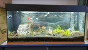 Aquarium Juwel 200liter inkl zubehöre