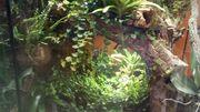 Regenwaldterrarium komplett