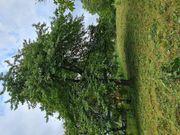Gartengrundstück Hanglage in Remshalden-Geradstetten zu