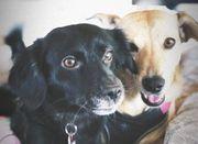 Bessy und Pida suchen ein