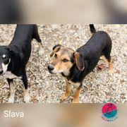 Slava - Lass dich von ihr