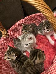 Kitten Katze Kater