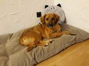 Junghund Welpe Rüde sucht Kuschelplatz