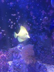 Wochenendangebot Hawaiidoc Mandarinenfische