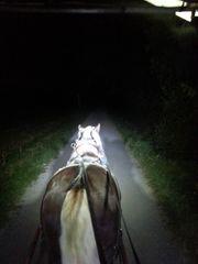Freie Pferdebox