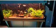 Aquarium 720 Liter mit Besatz