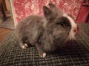 Tolle Kaninchen Babys ab sofort