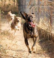Rüpel lieber Hundebub sucht sportliche