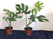 Pflanzen für Ihr Terrarium