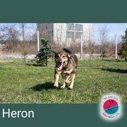 Heron - würde sich gerne zu