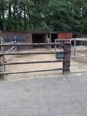 Pferdeboxen und 1 Offenstall frei