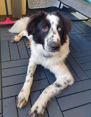 Cooper kluger selbstbewusster Junghund