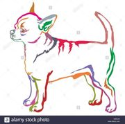 suchen Chihuahua gerne auch als