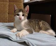 Katzenbaby männlich 13 Wochen jung
