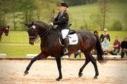 Reitunterricht auf sehr guten Pferden