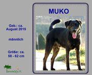 MUKO - ein temperamentvoller neugieriger Rüde