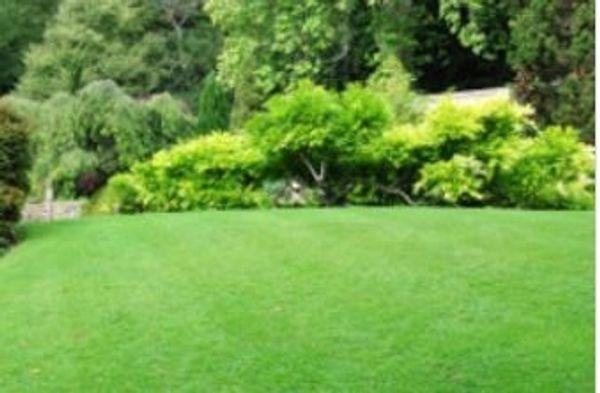 Suche Freizeitgrundstück Wochenendgrundstück bzw Garten