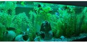 Aquarium Aquatlantis 100 x 40