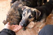 Tierschutz Mischling Pino sucht ein