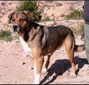 PLATA - riesengroßes liebes Hundemädchen