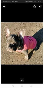 woof doggydolly Hundemantel Hundejacke pink