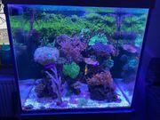 Aquariumauflösung
